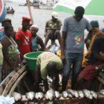 Mais de 100 jovens desempregados com a proibição da venda de peixe na Ilha e Mabunda